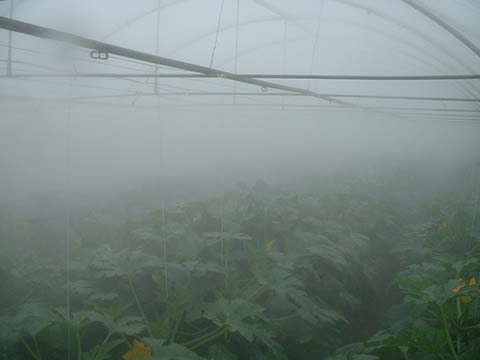 Greenhouse Humidification Features