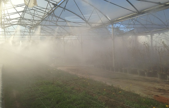How to Use Fog Systems for Greenhouses