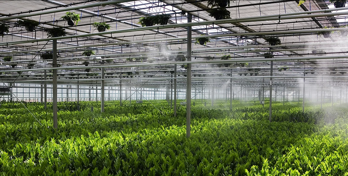 FOGGING SYSTEM IN GREENHOUSES