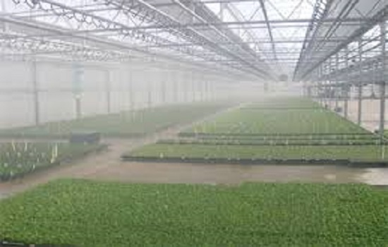 What is Greenhouse Humidification Services