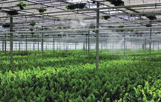 What is the Effect of High Pressure Fog Systems in Greenhouses
