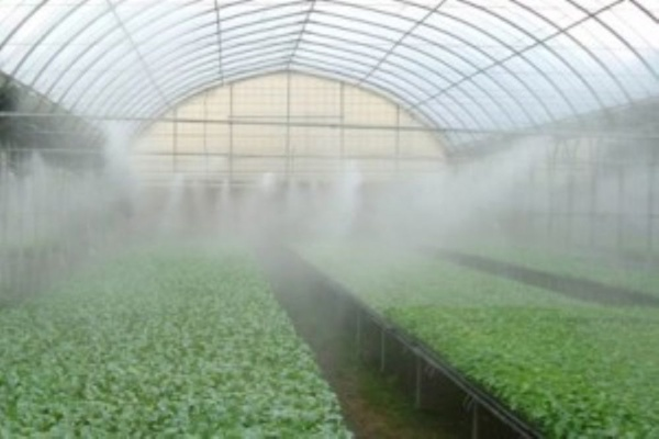 Fogging System and Efficient Greenhouse